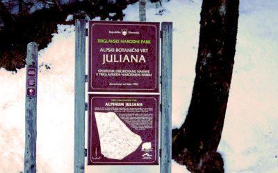 O Julijana…